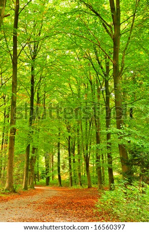 A path in the forest at the start of the autumn. - stock photo