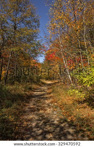 A path in the woods with Autumn foliage and blue sky.