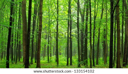 a path is in the green forest - stock photo