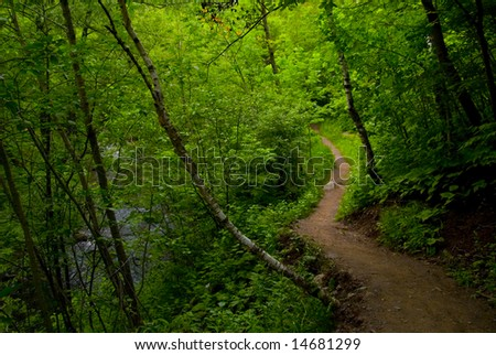 A path out of the dark forest of the North Woods of Minnesota. - stock photo