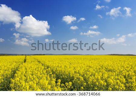 A path through blooming canola fields under a blue sky with clouds. - stock photo