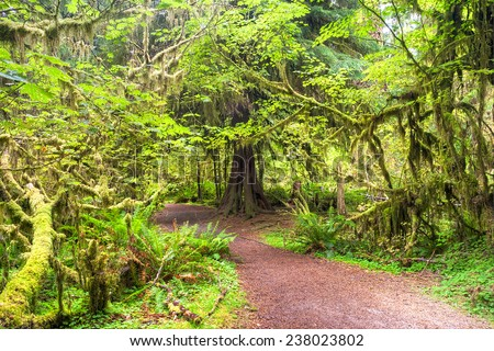 A path through the lush Hoh Rainforest in Olympic National Park, USA. - stock photo