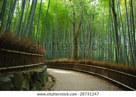 A path with dense bamboo groves on both sides