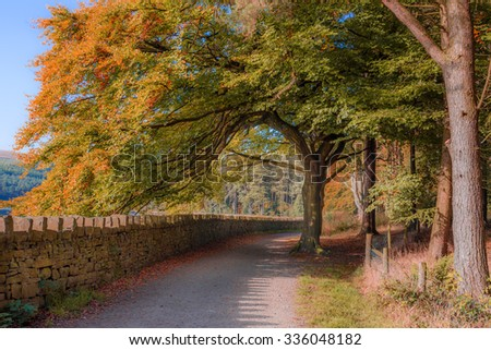 A pathway leading underneath a Beautiful autumnal tree - stock photo