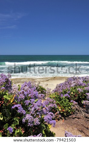 A pathway leads down to the beach between shoreline wildflowers in La Jolla, California. - stock photo