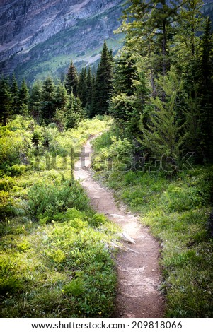 a pathway leads through the forest - stock photo