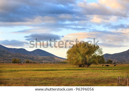 A peaceful rural scene in Utah, western United States, with a pasture, cows, tree and beautiful clouds. - stock photo