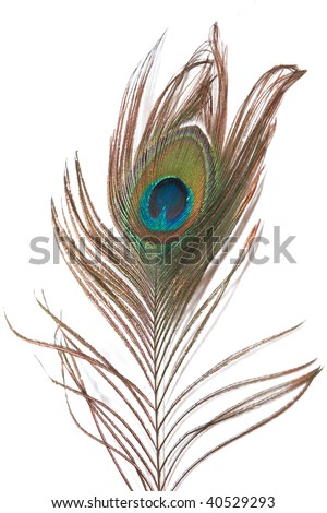 A peacock feather isolated on a white background - stock photo