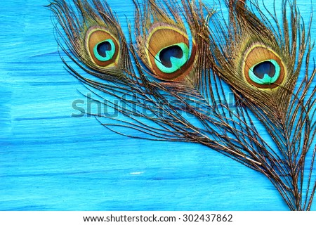 A peacock feather on wooden blue background with copy space. - stock photo