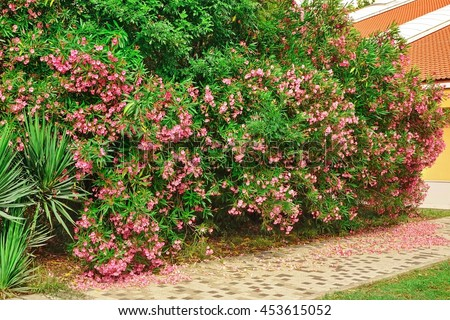A Pedestrian Tiled Road Or Footpath At The Front Or Back Yard Along A Flowering Shrubs In An Exotic Tropical Garden Leading To The Yellow House With Red Roof - stock photo