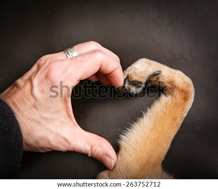a person and a dog making a heart shape with the hand and paw - stock photo