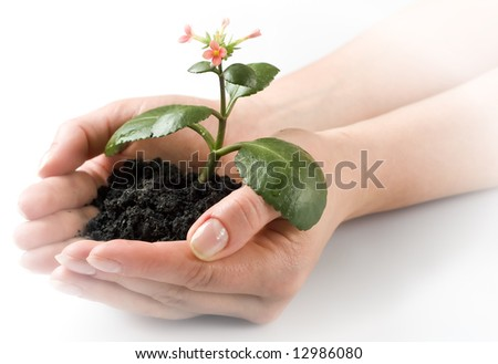 a person holding a small plant in the studio - stock photo