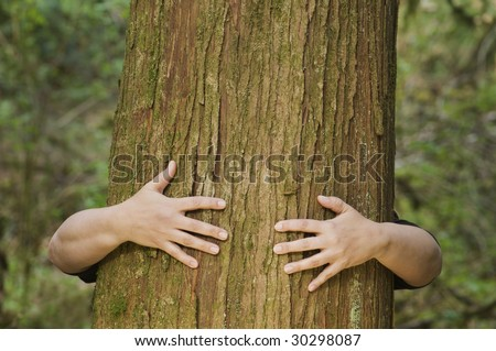 A person hugs a large cedar tree - stock photo