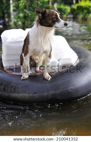 A Pet Dog Ferried to Safety on a Flooded Section of Road in Bangkok During the November 2011 Floods - stock photo
