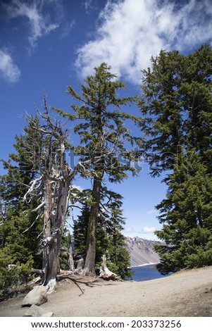 A photo of a dead tree at the rim of Crater Lake. - stock photo