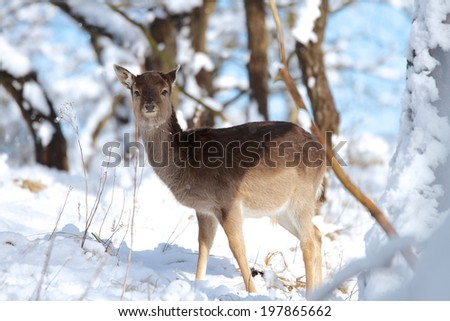 A photo of a deer in the snow - stock photo