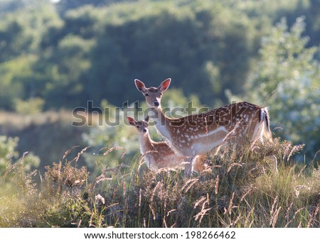 A photo of a deer in the wild - stock photo