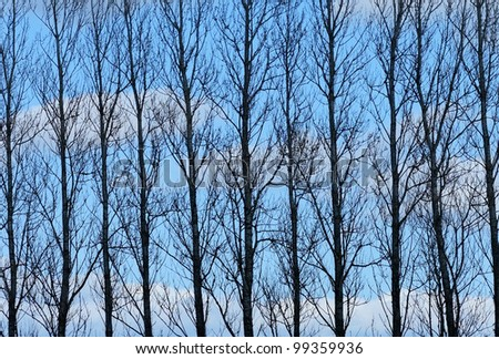 A photo of a silhouette of trees and blue sky with clouds - stock photo