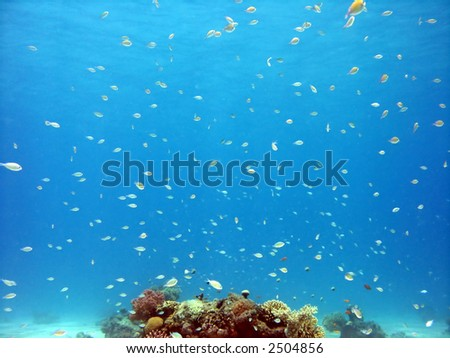 A photo of coral and lots of fish - stock photo