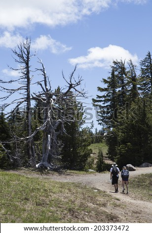 A photo of dead trees and hikers along the rim of Crater Lake. - stock photo