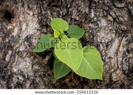 A photo of Green leaves on the tree bark  - stock photo
