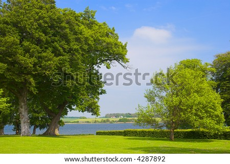 A photo of huge trees in a Danish park by the sea - stock photo