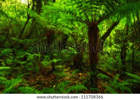 A photo of lush rain forest - stock photo