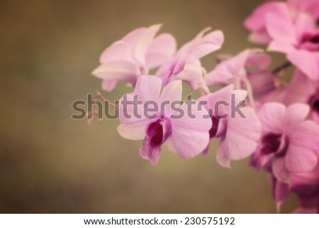 a photo of orchid flower in green garden,vintage style - stock photo