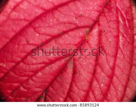 A photo of Red autumn leaves in sunlight