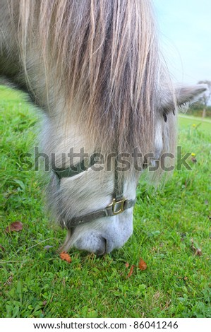 A photo of Small horses on a field