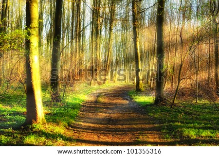 A photo of Sunset in pine forest - stock photo