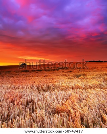 A photo of the countryside at sunset - stock photo