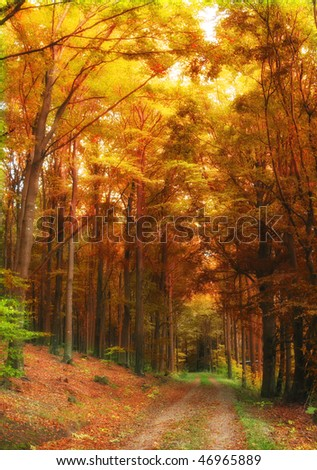 A photo of the forest dressed in the colors of autumn