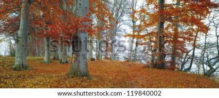 A photo of the forest in late autumn - stock photo