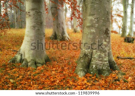 A photo of the forest in late autumn - extremely detailed photo - stock photo