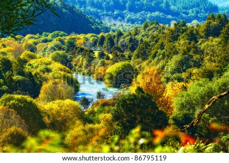 A photo of the rain forest in New Zealand - stock photo