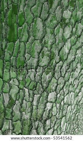 A photo of tree bark in Africa - useful as background - stock photo