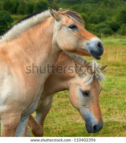 A photo of two loving horses - stock photo