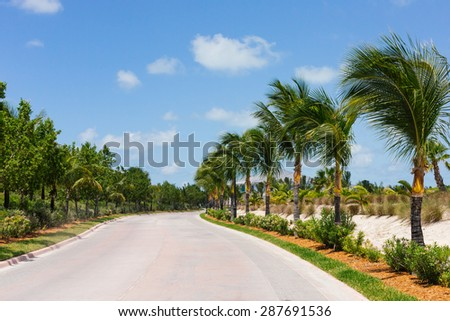 A photograph of a road with beautiful palm trees