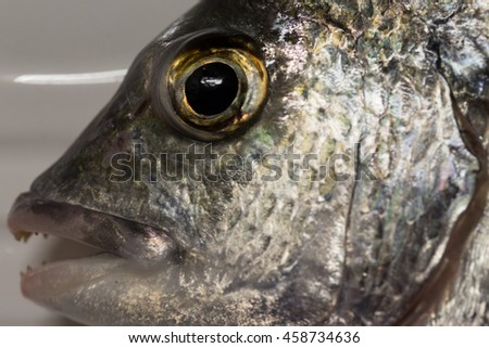 A photograph of a Yellowfin Bream on a dinner plate, which is a popular fish with recreational fisherman in Australia.