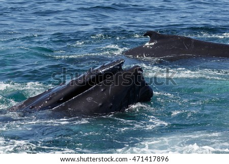 A photograph of some humpback whales surfacing off the coast of Provincetown in Cape Cod, Massachusetts, United States.