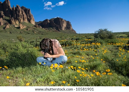A photographer sits in a field of poppies photographing a close up of a single flower. - stock photo