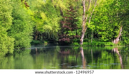 A photography of a green trees and lake background
