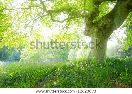 A photography of a white light dream forest - stock photo