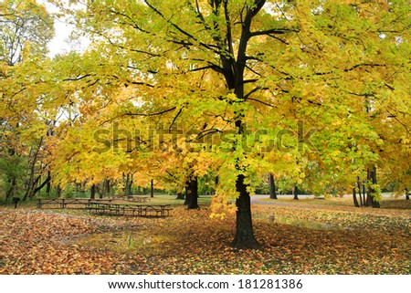 A Picnic Grove Amid Blazing Autumn Colors In The Rain At The Park, Sharon Woods, Southwestern Ohio, USA