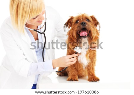 A picture of doctor examining a dog over white background