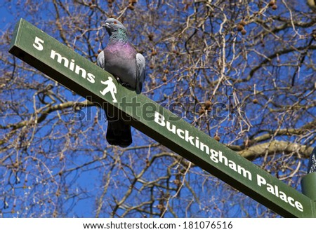 A pigeon on a 'Buckingham Palace' Pedestrian Signpost in London's St. James's Park. - stock photo