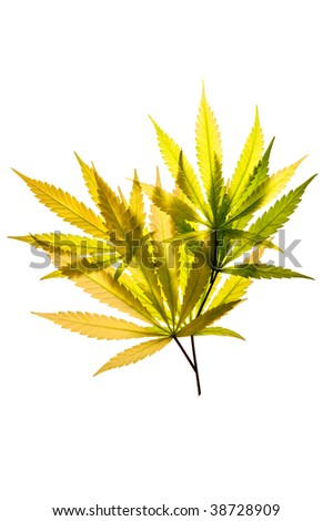 A pile of colorful leaves on a white background - stock photo