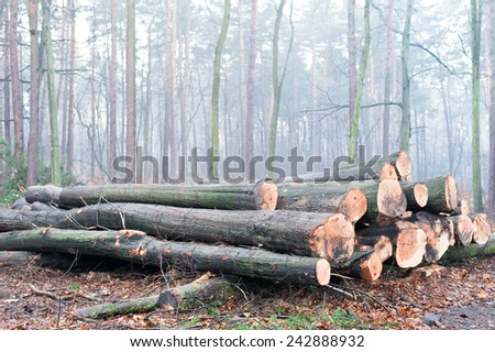 A pile of cut tree trunks . - stock photo