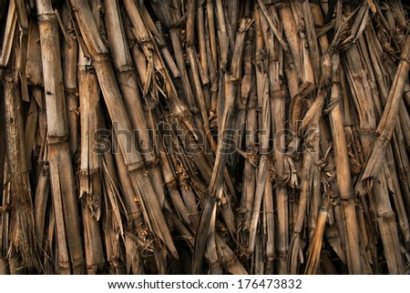 A pile of dried corn stalks for background texture.